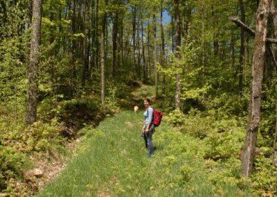 Woodland-trails